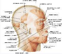 http://www.anatomy.tj/images/107.jpg