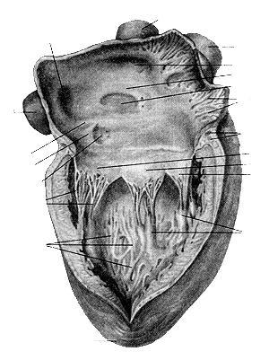 внутренняя поверхность бедра как убрать жир массажем