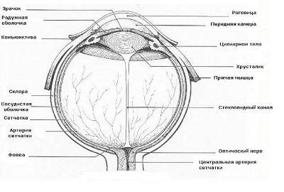 Зрение улучшить очки