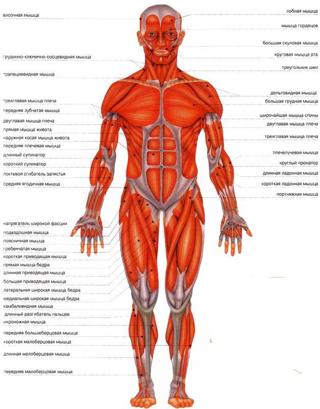 поверхности тела человека